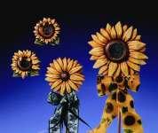 2000101 Giessform Sonnenblumen 4 Motive